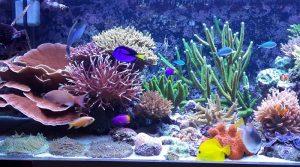 Ticari İşletme – Canlı Resif / Deniz Akvaryumu