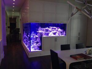 çalışma deniz akvaryumu