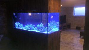 Özel Rezidans – Canlı Resif / Deniz Akvaryumu