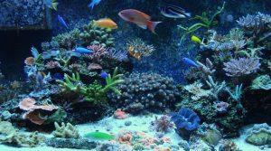 Şirket Merkezi – Canlı Resif / Deniz Akvaryumu