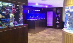 Ticari Showroom