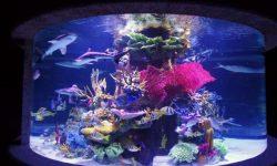 Yaşam alanı akvaryum türleri-7