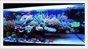 Deniz Akvaryumu Akıntı ve Aydınlatması