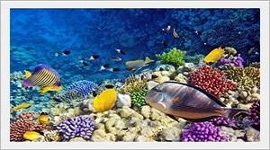 Kızıldeniz Deniz Akvaryumu Canlıları